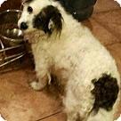 Adopt A Pet :: Rufus