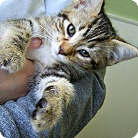Adopt A Pet :: Lovey - Toledo, OH