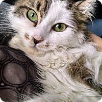 Adopt A Pet :: Keira Mae - Colmar, PA
