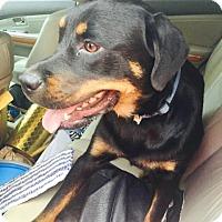Adopt A Pet :: Milo - Burleson, TX