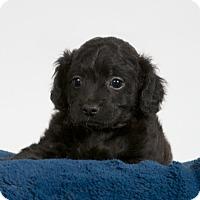 Adopt A Pet :: Angie - Nuevo, CA