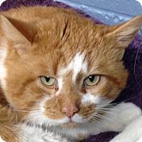 Adopt A Pet :: Cerium - Colorado Springs, CO