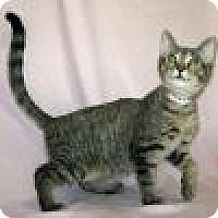 Adopt A Pet :: Hawkeye - Powell, OH