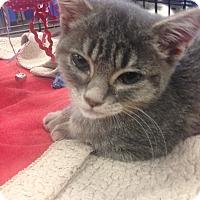 Adopt A Pet :: Quintana - San Ramon, CA
