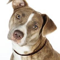 Adopt A Pet :: Gretchen - Lodi, CA