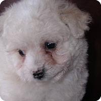Adopt A Pet :: Frozen Princess - Yucaipa, CA