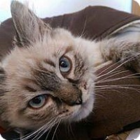 Adopt A Pet :: Ozzy - St. Louis, MO