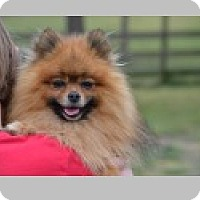 Adopt A Pet :: Bowie - Pittsboro, NC
