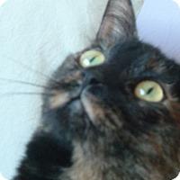 Adopt A Pet :: Astrid - Toronto, ON