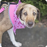 Adopt A Pet :: Sheba - Kingwood, TX