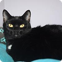 Adopt A Pet :: Gamora - Apex, NC