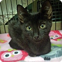 Adopt A Pet :: Rivit - East Brunswick, NJ