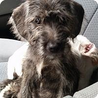 Adopt A Pet :: Gretchen - Gainesville, FL