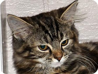 Domestic Longhair Cat for adoption in Cookeville, Tennessee - Katze--ADOPTION IN PROGRESS