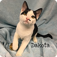 Adopt A Pet :: Dakota - Foothill Ranch, CA
