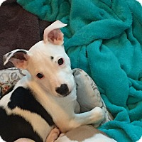 Adopt A Pet :: Meave (FORT COLLINS) - Fort Collins, CO