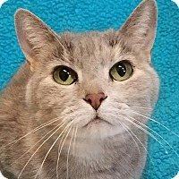 Adopt A Pet :: Bea - Colfax, IA