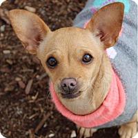 Adopt A Pet :: TBD - Red Bluff, CA