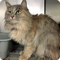 Adopt A Pet :: Gayle - North Las Vegas, NV