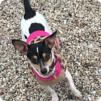 Adopt A Pet :: Wendy - Middlebury, CT