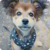 Adopt A Pet :: Holly - Jackson, TN