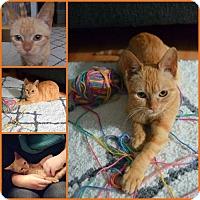 Adopt A Pet :: Satsuma - Philadelphia, PA