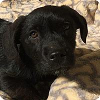 Adopt A Pet :: Charlston - Sunnyvale, CA