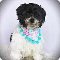 Adopt A Pet :: Khloe - Carrollton, TX
