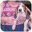 Photo 3 - Treeing Walker Coonhound Puppy for adoption in Buffalo, New York - John Boy: Long on ears!