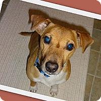 Adopt A Pet :: Bucky - Thomasville, NC