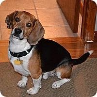 Adopt A Pet :: Thomas - Novi, MI