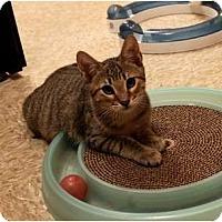 Adopt A Pet :: Maui - Nolensville, TN