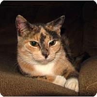 Adopt A Pet :: Katrina - Oxford, NY