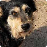 Adopt A Pet :: Annie - Quinlan, TX