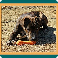 Adopt A Pet :: Tito - Knoxville, TN