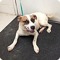 Adopt A Pet :: Tyler - Lancaster, VA