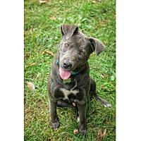Adopt A Pet :: Asher-PENDING ADOPTION - Lancaster, PA