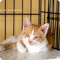 Adopt A Pet :: Corinne - Island Park, NY
