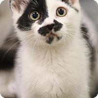 Adopt A Pet :: Grace - Sacramento, CA
