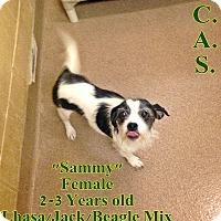 Adopt A Pet :: 1-8 Sammy - Triadelphia, WV