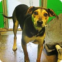 Adopt A Pet :: Sweetheart - Redding, CA