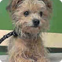 Adopt A Pet :: Otis - Redondo Beach, CA