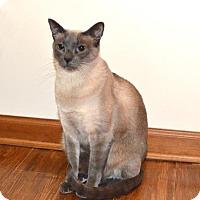 Adopt A Pet :: Mikky - Pinckney, MI