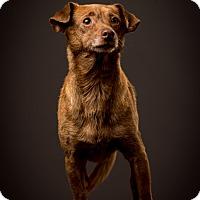 Adopt A Pet :: Chaplin - Woonsocket, RI