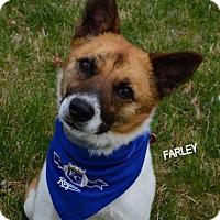 Adopt A Pet :: Farley - Independence, MO