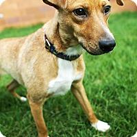 Adopt A Pet :: Sunny - Appleton, WI