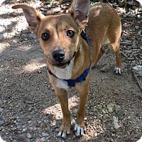 Adopt A Pet :: Doowop - Towson, MD