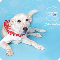 Adopt A Pet :: Christian - Houston, TX