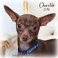 Adopt A Pet :: Charlie - New Orleans, LA