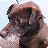 Adopt A Pet :: Quiggly - Portland, OR
